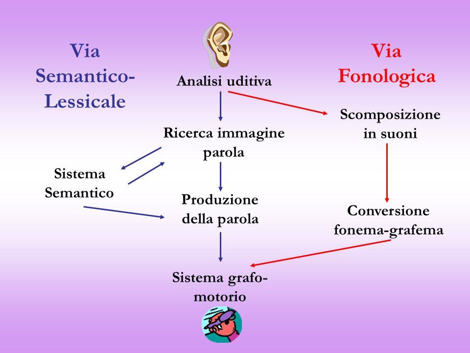 Analisi uditiva Ricerca immagine parola Produzione della parola Sistema grafo- motorio Scomposizione in suoni Conversione fonema-grafema Sistema Seman