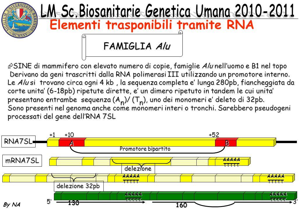 By NA SINE di mammifero con elevato numero di copie, famiglie Alu nelluomo e B1 nel topo SINE di mammifero con elevato numero di copie, famiglie Alu n