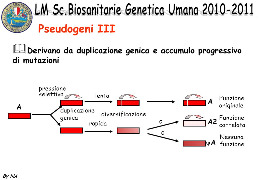 By NA DNA ripetuto in tandem