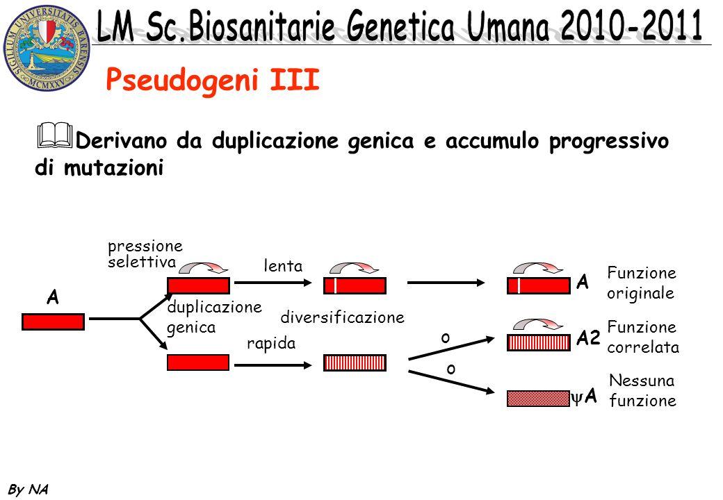 By NA Pseudogeni IV Pseudogeni non processati sono presenti nel genoma in regioni non sinteniche con la copia codificante.