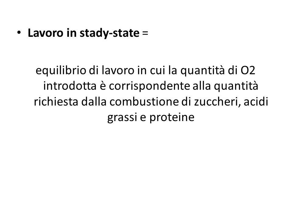 Lavoro in stady-state = equilibrio di lavoro in cui la quantità di O2 introdotta è corrispondente alla quantità richiesta dalla combustione di zuccher