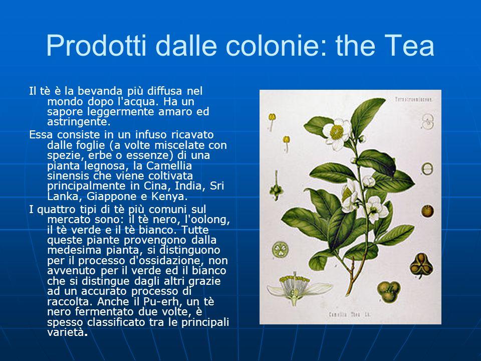 Prodotti dalle colonie: the Tea Il tè è la bevanda più diffusa nel mondo dopo l'acqua. Ha un sapore leggermente amaro ed astringente. Essa consiste in