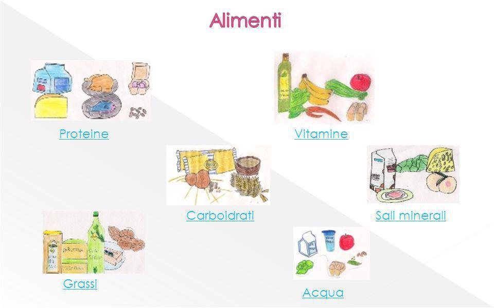 Proteine Carboidrati Grassi Vitamine Sali minerali Acqua