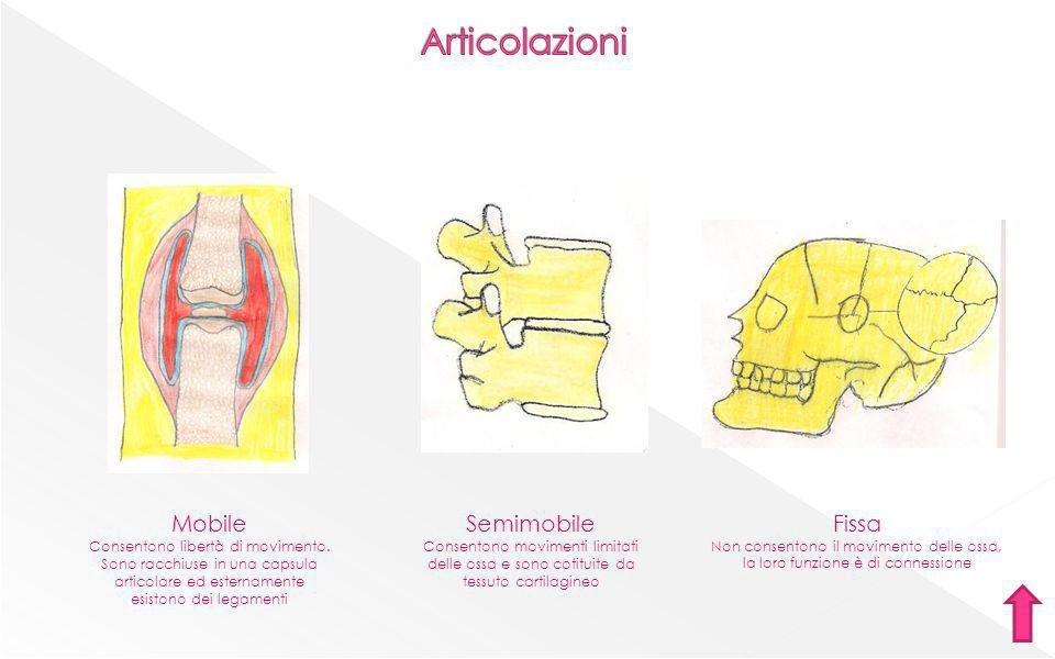sterno-cleido-mastoideo deltoide facciali Gran pettorale retto delladdome sartorio quadricipite femoraletibiale anteriore trapezio flessori della mano