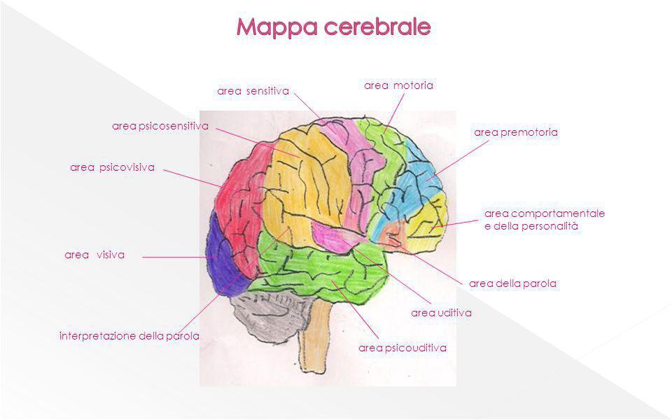 area comportamentale e della personalità area premotoria area motoria area sensitiva area psicosensitiva area psicovisiva area visiva area psicouditiv