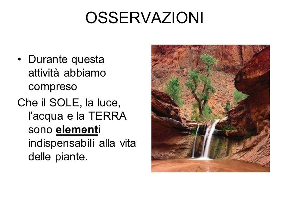 OSSERVAZIONI Durante questa attività abbiamo compreso Che il SOLE, la luce, lacqua e la TERRA sono elementi indispensabili alla vita delle piante.