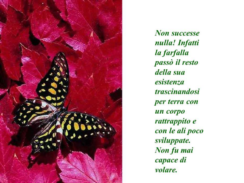 Non successe nulla! Infatti la farfalla passò il resto della sua esistenza trascinandosi per terra con un corpo rattrappito e con le ali poco sviluppa