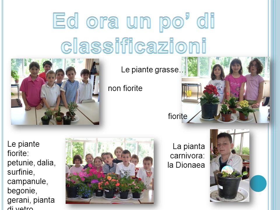 Le piante grasse… non fiorite fiorite Le piante fiorite: petunie, dalia, surfinie, campanule, begonie, gerani, pianta di vetro… La pianta carnivora: l
