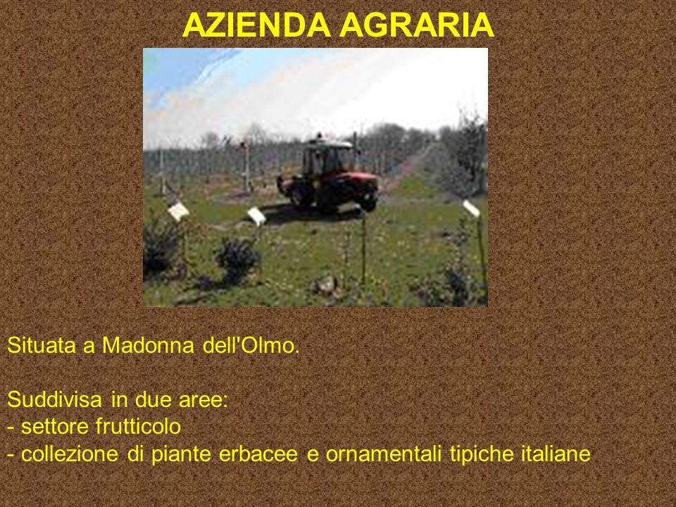 AZIENDA AGRARIA Situata a Madonna dell Olmo.