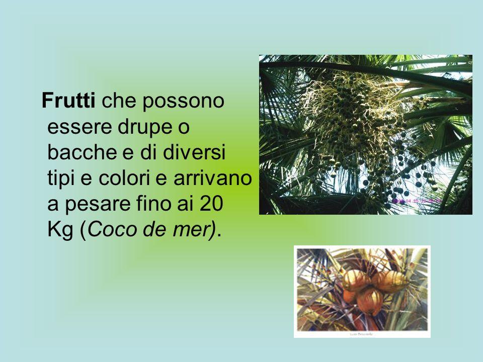 Frutti che possono essere drupe o bacche e di diversi tipi e colori e arrivano a pesare fino ai 20 Kg (Coco de mer).