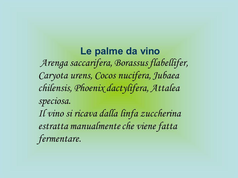 Le palme da vino Arenga saccarifera, Borassus flabellifer, Caryota urens, Cocos nucifera, Jubaea chilensis, Phoenix dactylifera, Attalea speciosa. Il