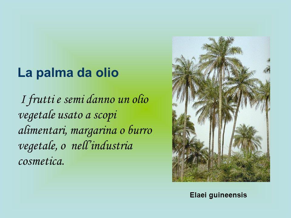 La palma da olio I frutti e semi danno un olio vegetale usato a scopi alimentari, margarina o burro vegetale, o nellindustria cosmetica. Elaei guineen