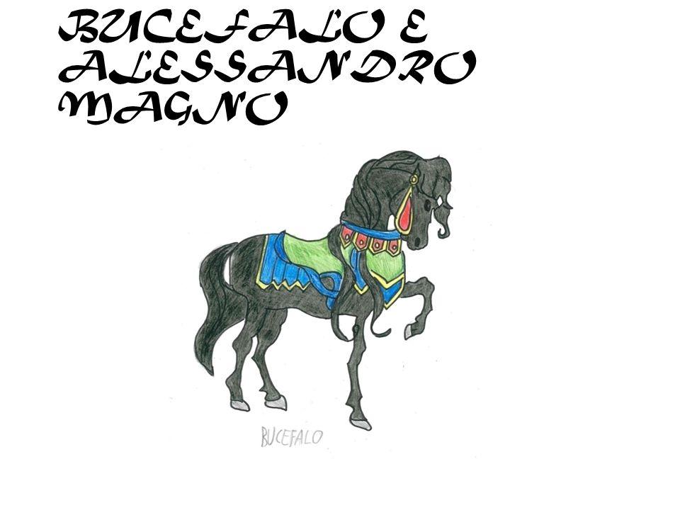 IL CAVALLO E…..LUOMO A CURA DI DAVIDE C. 4^C