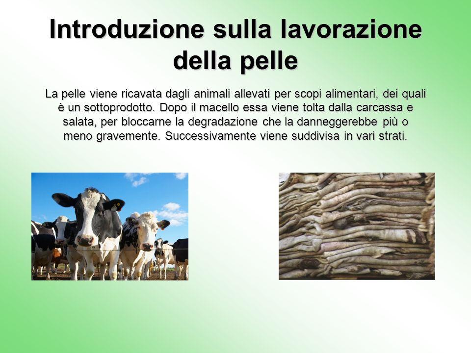 Introduzione sulla lavorazione della pelle La pelle viene ricavata dagli animali allevati per scopi alimentari, dei quali è un sottoprodotto. Dopo il