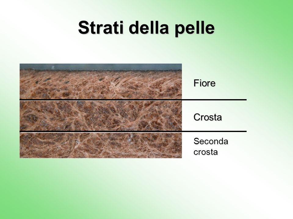 Strati della pelle Fiore Seconda crosta Crosta