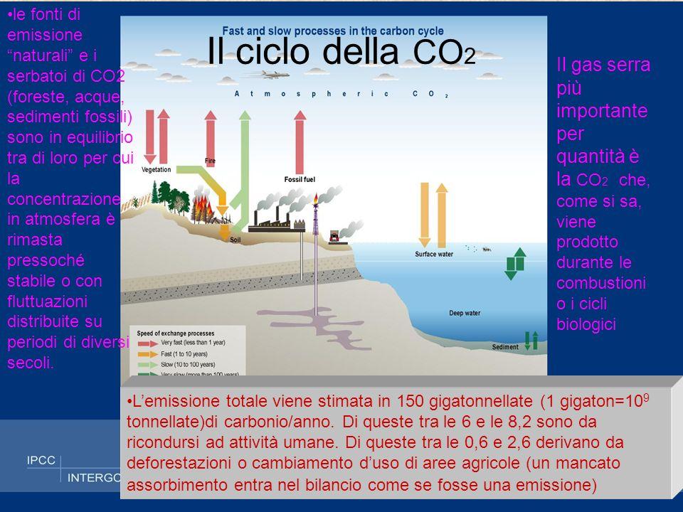 Passato e …futuro della CO2 Lutilizzo intensivo dei combustibili fossili e la deforestazione di ampie superfici ha determinato un brusco aumento della produzione di CO 2, più rapido dei meccanismi di assorbimento, da qui limpennata della concentrazione in atmosfera Notate che tutti i tipi di previsione danno una crescita di tipo esponenziale