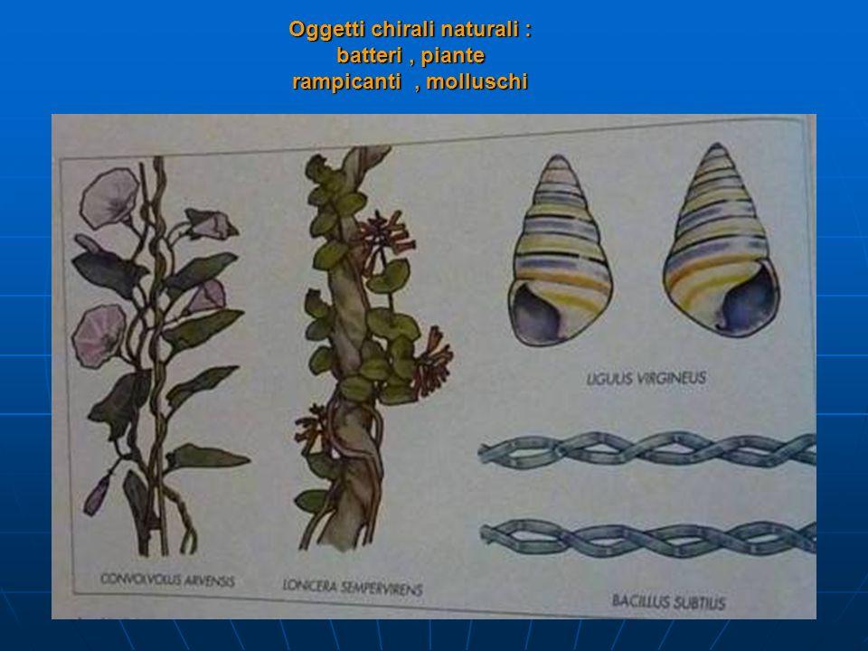 Oggetti chirali naturali : batteri, piante rampicanti, molluschi
