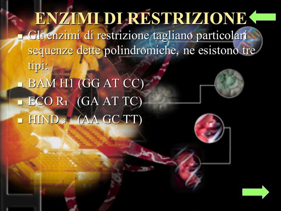 ENZIMI DI RESTRIZIONE Gli enzimi di restrizione tagliano particolari sequenze dette polindromiche, ne esistono tre tipi: Gli enzimi di restrizione tagliano particolari sequenze dette polindromiche, ne esistono tre tipi: BAM H1 (GG AT CC) BAM H1 (GG AT CC) ECO R 1 (GA AT TC) ECO R 1 (GA AT TC) HIND 3 (AA GC TT) HIND 3 (AA GC TT)
