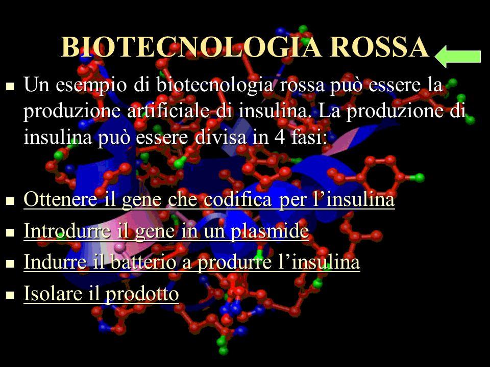 BIOTECNOLOGIA ROSSA Un esempio di biotecnologia rossa può essere la produzione artificiale di insulina.