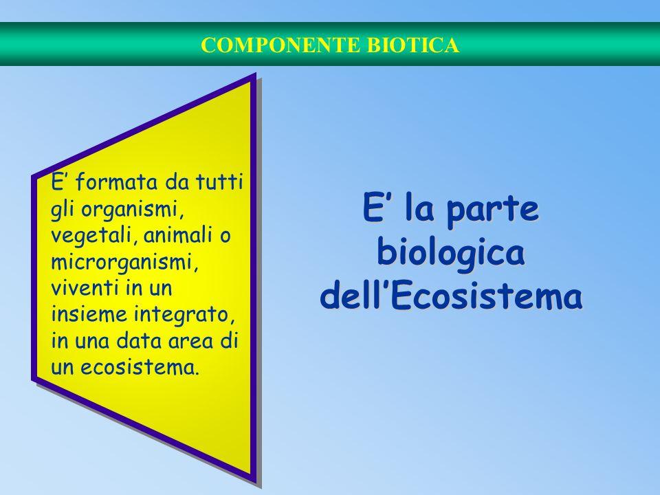 LECOSISTEMA Il concetto fondamentale dellEcologia Si può definire come l'unita fondamentale che si considera in ecologia. bioticaabiotica. Comprende d