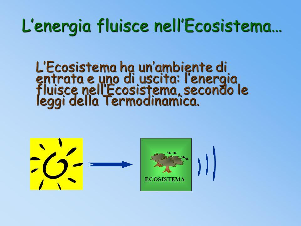 COMPONENTE ABIOTICA E la parte inorganica dellEcosistema E lambiente chimico-fisico in cui vive la componente biotica dellEcosistema