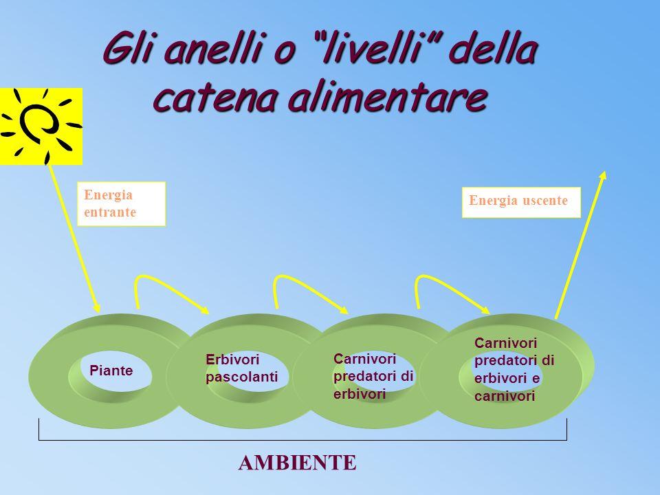 Le Catene alimentari Gli organismi dell'Ecosistema sono organizzati in costruzioni ad anelli dette catene alimentari.
