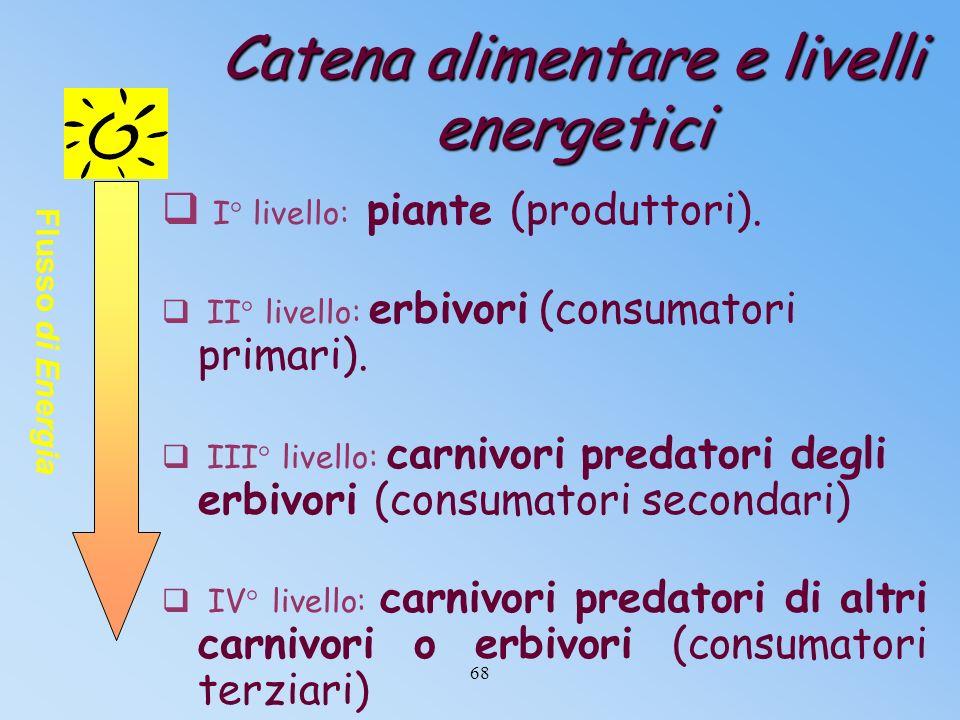 Gli anelli o livelli della catena alimentare Energia entrante Energia uscente Piante Erbivori pascolanti Carnivori predatori di erbivori Carnivori pre