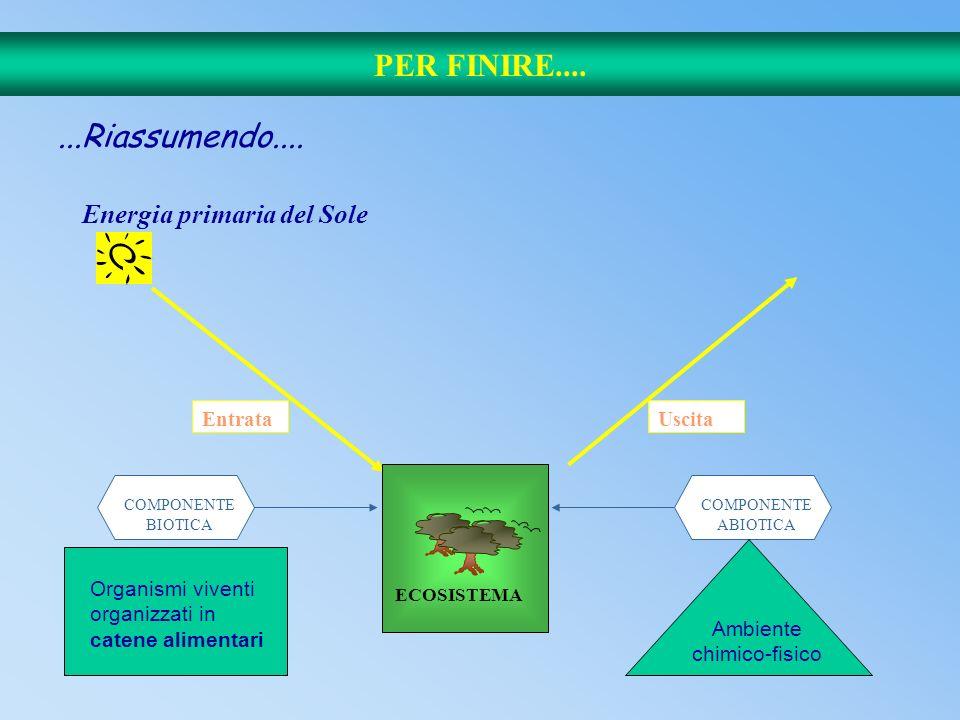 68 Catena alimentare e livelli energetici I° livello: piante (produttori). II° livello: erbivori (consumatori primari). III° livello: carnivori predat