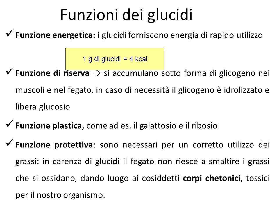 Funzioni dei glucidi Funzione energetica: i glucidi forniscono energia di rapido utilizzo Funzione di riserva si accumulano sotto forma di glicogeno n
