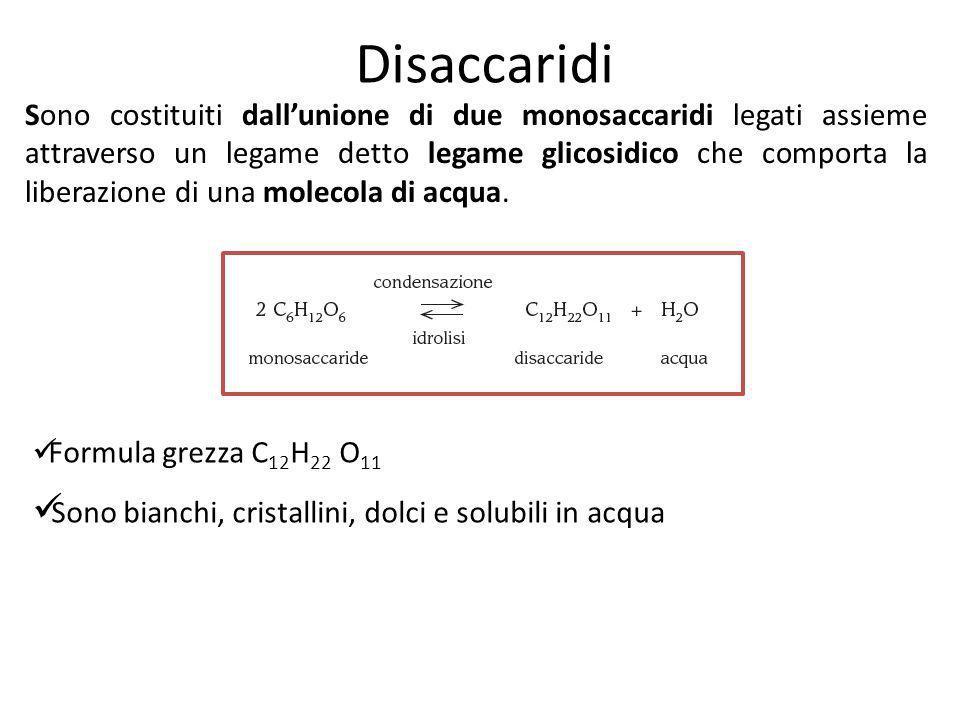 Disaccaridi Sono costituiti dallunione di due monosaccaridi legati assieme attraverso un legame detto legame glicosidico che comporta la liberazione d