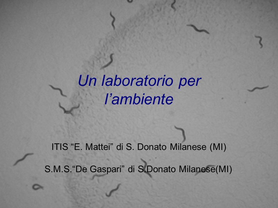 Un laboratorio per lambiente ITIS E. Mattei di S. Donato Milanese (MI) S.M.S.De Gaspari di S.Donato Milanese(MI)