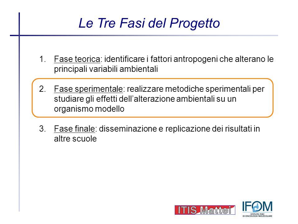 Le Tre Fasi del Progetto 1.Fase teorica: identificare i fattori antropogeni che alterano le principali variabili ambientali 2.Fase sperimentale: reali