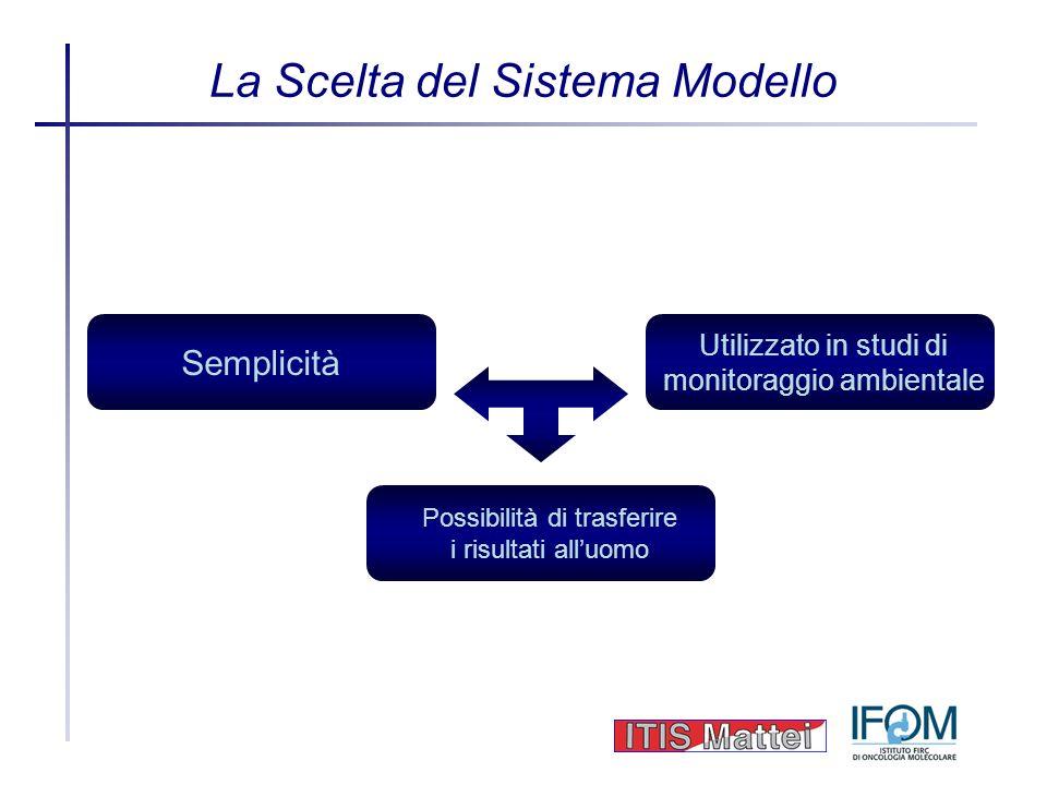La Scelta del Sistema Modello Semplicità Utilizzato in studi di monitoraggio ambientale Possibilità di trasferire i risultati alluomo