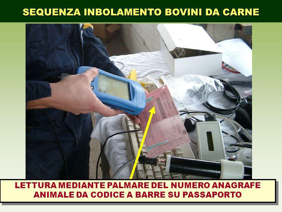 SEQUENZA INBOLAMENTO BOVINI DA CARNE LETTURA MEDIANTE PALMARE DEL NUMERO ANAGRAFE ANIMALE DA CODICE A BARRE SU PASSAPORTO
