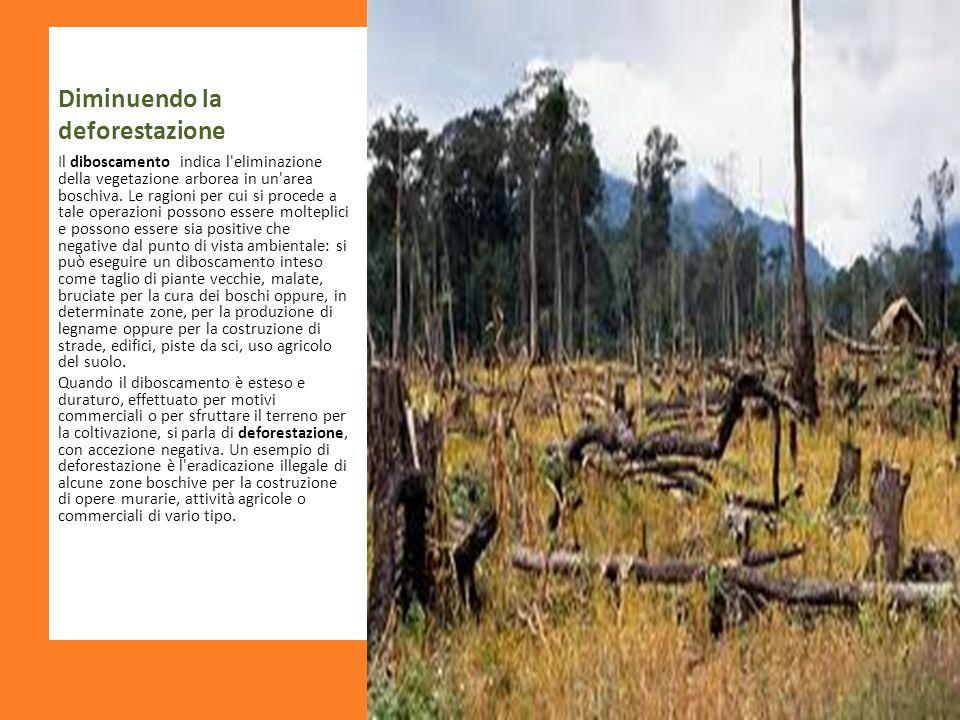 Diminuendo la deforestazione Il diboscamento indica l'eliminazione della vegetazione arborea in un'area boschiva. Le ragioni per cui si procede a tale