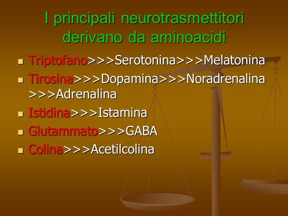 I principali neurotrasmettitori derivano da aminoacidi Triptofano>>>Serotonina>>>Melatonina Triptofano>>>Serotonina>>>Melatonina Tirosina>>>Dopamina>>
