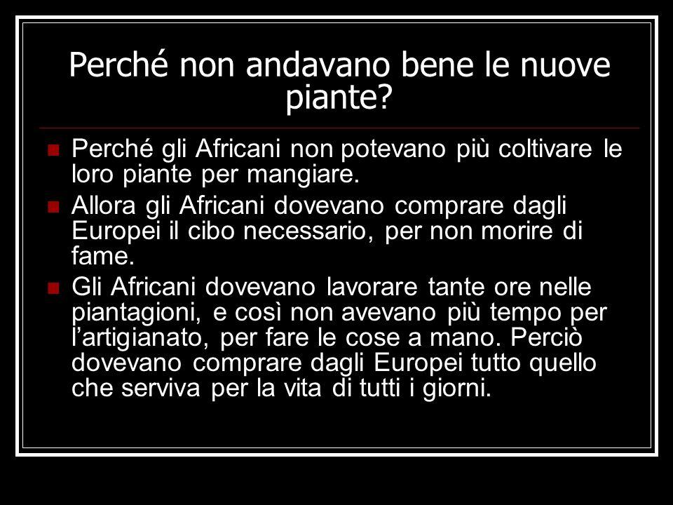 Perché non andavano bene le nuove piante? Perché gli Africani non potevano più coltivare le loro piante per mangiare. Allora gli Africani dovevano com