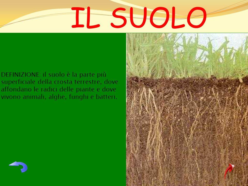 DEFINIZIONE: il suolo è la parte più superficiale della crosta terrestre, dove affondano le radici delle piante e dove vivono animali, alghe, funghi e