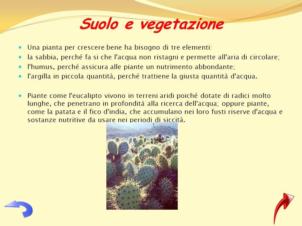 Suolo e vegetazione Una pianta per crescere bene ha bisogno di tre elementi: la sabbia, perché fa si che l'acqua non ristagni e permette all'aria di c