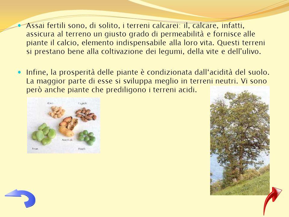 Assai fertili sono, di solito, i terreni calcarei: il, calcare, infatti, assicura al terreno un giusto grado di permeabilità e fornisce alle piante il