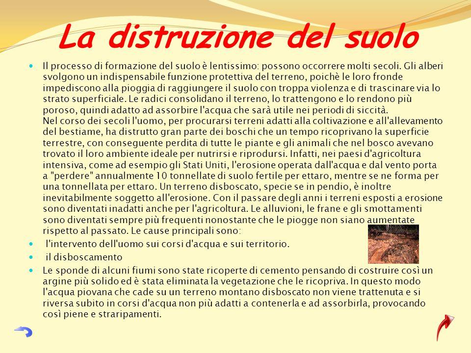 La distruzione del suolo Il processo di formazione del suolo è lentissimo: possono occorrere molti secoli. Gli alberi svolgono un indispensabile funzi