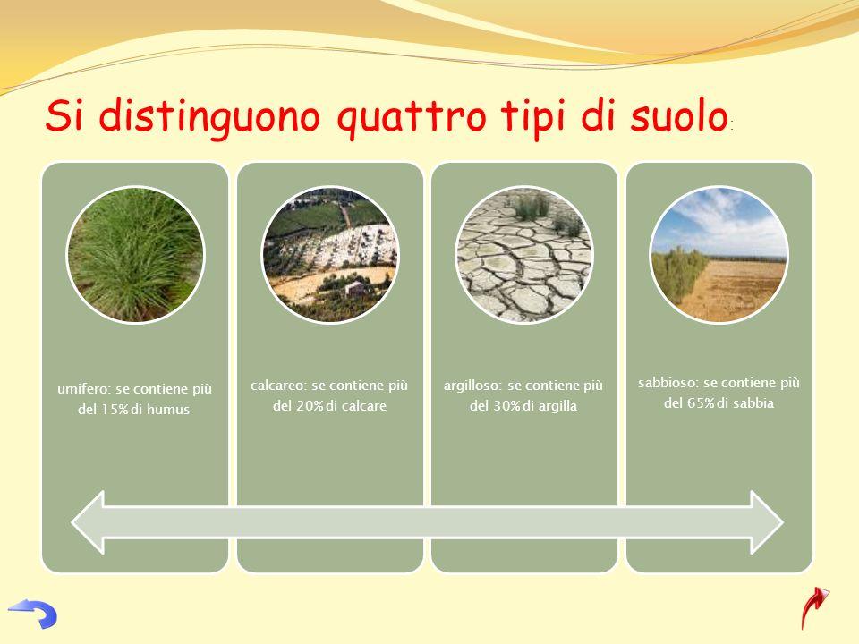 Si distinguono quattro tipi di suolo : umifero: se contiene più del 15% di humus calcareo: se contiene più del 20% di calcare argilloso: se contiene p