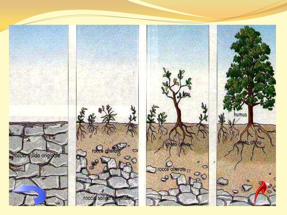 IL SUOLO AGRARIO: COMPOSIZIONE E CARATTERISTICHE Luomo, nel corso del tempo, ha imparato ben presto a riconoscere i tipi di suolo più adatti alle proprie coltivazioni e ha imparato anche a sfruttare i suoli secondo le proprie esigenze, perfezionando man mano le tecniche per trasformarli profondamente: arando, dissodando, irrigando e concimando, luomo ha modificato il suolo naturale che si è trasformato in un suolo più ricco di sostanze nutritive e più adatto alla produzione agricola.
