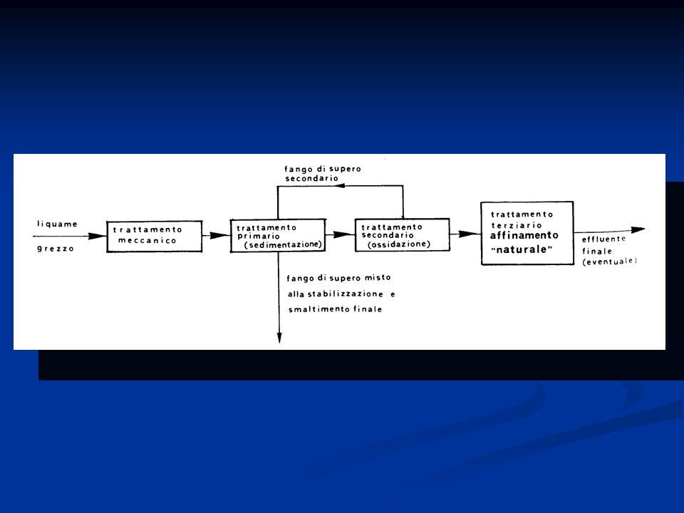 FITODEPURAZIONE filtrazione a deflusso verticale Granulometria varia: Ghiaia da 2-8 mm Ghiaia da 10-20mm Drenaggio di 20-40mm Laffluente subisce un trattamento fisico (filtrazione) e Biologico grazie alla biomassa presente sul supporto LAlimentazione delle acque deve essere superiore alla velocità di infiltrazione e intermittente.
