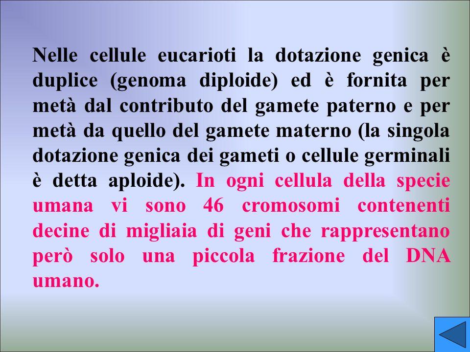 Il Progetto Genoma Il 26/6/2000 è stata annunciata a tutto il mondo la notizia della decifrazione del Genoma umano cioè del codice genetico delluomo.