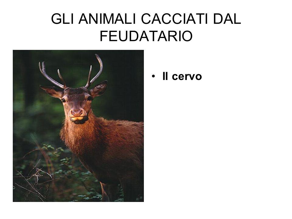 GLI ANIMALI CACCIATI DAL FEUDATARIO Il cervo