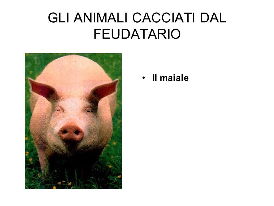 GLI ANIMALI CACCIATI DAL FEUDATARIO Il maiale