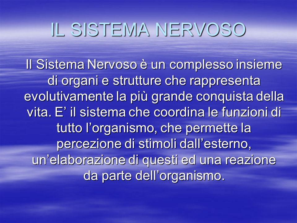 SNC e SNP Il Sistema Nervoso è suddiviso in due parti: Il Sistema Nervoso Centrale (SNC), costituito dallencefalo e dal midollo spinale; Il Sistema Nervoso Centrale (SNC), costituito dallencefalo e dal midollo spinale; Il Sistema Nervoso Periferico (SNP), costituito dai gangli e dai nervi fuoriuscenti dal SNC (12 paia dal cranio e 31 paia dal midollo spinale); Il Sistema Nervoso Periferico (SNP), costituito dai gangli e dai nervi fuoriuscenti dal SNC (12 paia dal cranio e 31 paia dal midollo spinale); A seconda del suo funzionamento, può essere suddiviso in A seconda del suo funzionamento, può essere suddiviso in volontario, cioè controllabile dalla volontà (come quello che innerva la muscolatura scheletrica); volontario, cioè controllabile dalla volontà (come quello che innerva la muscolatura scheletrica); autonomo, cioè indipente dalla volontà (come quello che innerva gli organi interni); autonomo, cioè indipente dalla volontà (come quello che innerva gli organi interni); La cellula fondamentale del Sistema Nervoso è il neurone, ma ne fanno parte anche altre cellule, come le cellule della Glia, che hanno importanti funzioni trofiche, di sostegno e di protezione.