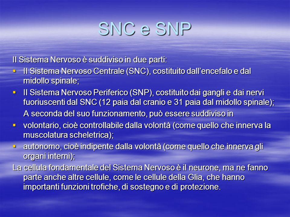 SNC e SNP Il Sistema Nervoso è suddiviso in due parti: Il Sistema Nervoso Centrale (SNC), costituito dallencefalo e dal midollo spinale; Il Sistema Ne