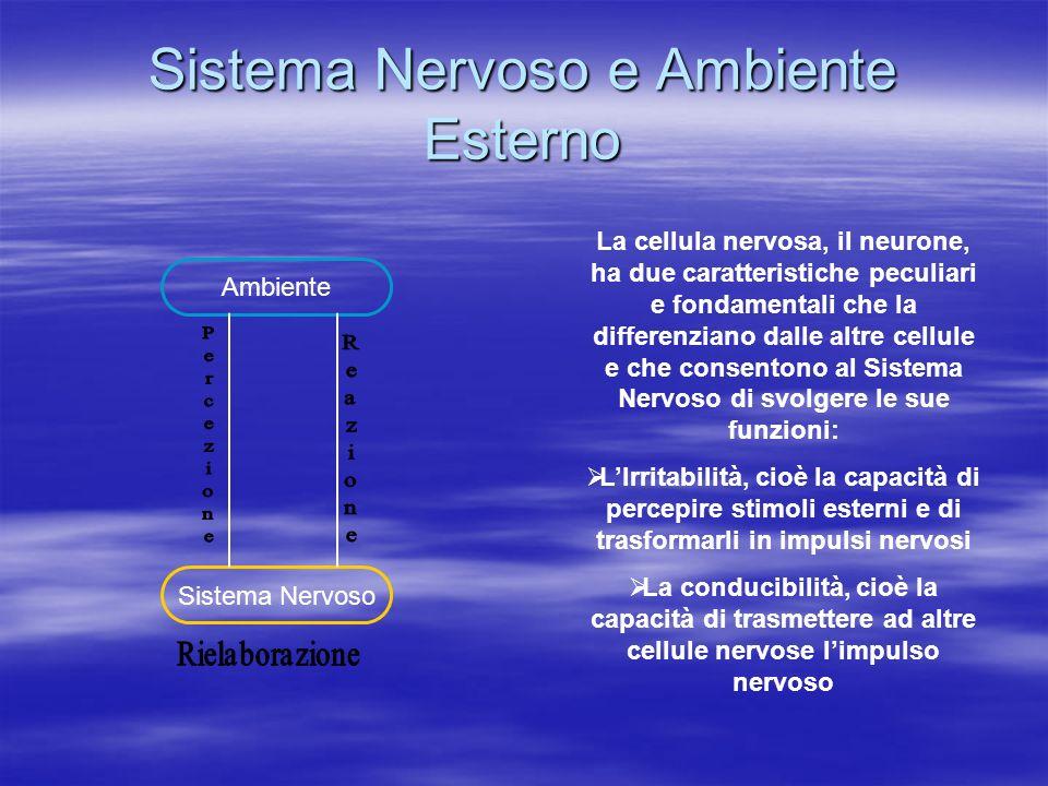 Sistema Nervoso e Ambiente Esterno La cellula nervosa, il neurone, ha due caratteristiche peculiari e fondamentali che la differenziano dalle altre ce